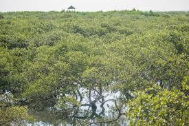 「紅樹林」的圖片搜尋結果