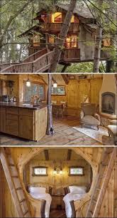 Tree House Photos Top 25 Best Tree House Beds Ideas On Pinterest Tree House