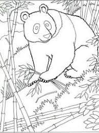 Pandabeer Kleurplaten Topkleurplaatnl
