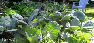 Small Picture Vegetable Garden Design Choosing the Right Layout For Your Garden