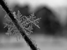 black and white snow photography. Contemporary Snow Snow Winter And Snowflake Image For Black And White Snow Photography