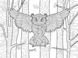 Uil In Het Boek Voor Volwassenen Vector Kleuren Forest Stockvector