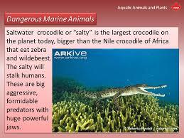 Aquatic Animals Chart Aquatic Animals And Plants An Introduction Kivu