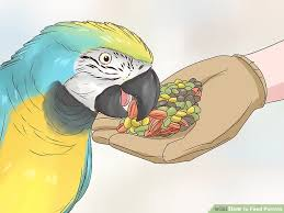 Parrot Diet Chart How To Feed Parrots 12 Steps With Pictures Wikihow