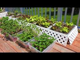 container garden how to start vegetable