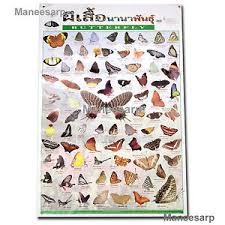 Details About Beautiful Butterfly Of The World Poster Butterflies Spesies Wall Chart Education