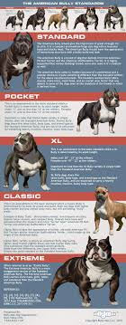 Dog Size Classification Chart 5 Types Of American Bully Dog Breeds American Bully Daily
