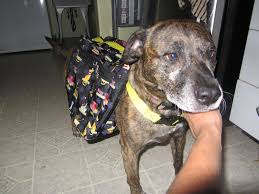 picture of 10 dog backpack