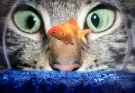 Image result for cat and a fish in a bowl