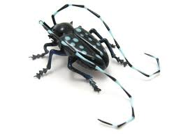 glass sculptor Wesley Fleming - artwork, 'Asian Longhorn Beetle' | Insect  art, Longhorn beetle, Glass artwork