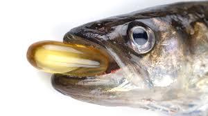fish oil tablet fishes ile ilgili görsel sonucu