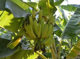 Fruit Plants  Buy 6000 Nursery Plants N Seeds OnlineKerala Fruit Trees