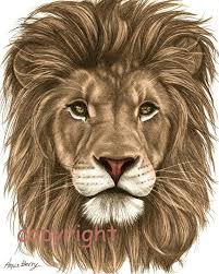 lion drawing color.  Lion Lion Pencil Drawing Colored 8x10 Fine Art Print By TheBerryPress 1500  Amy Thomson Donu0027t You Love This  To Color