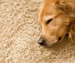 Frieze Carpeting Shag Carpet