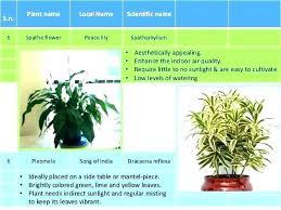 Best office plants no sunlight Sun Office Plants Direct Sunlight Best No House The Newspodco Best Office Plants No Sunlight Comece