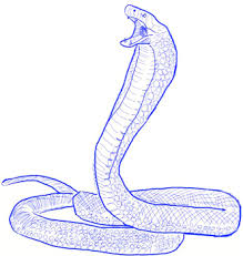 cobra drawing for kids. Interesting Kids How To Draw A King Cobra Snake Step 5 In Drawing For Kids