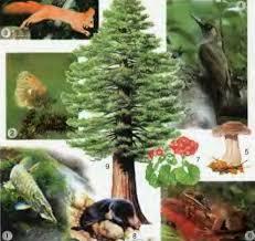 Природные системы Строение организмов Природоведение Реферат  Многообразие живых организмов 1 рыба 2 насекомое 3 8 млекопитающие 4 птица 5 гриб 6 лягушка 7 травянистое цветковое растение