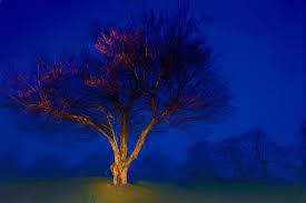 north ina painting blue ridge trees in fog at night ii by dan carmichael