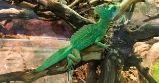 ing reptile habitat decor can get y