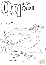 Small Picture Letter Q is for Quail coloring page Free Printable Coloring Pages