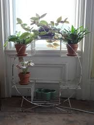 magical plant stands