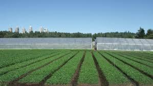 Αποτέλεσμα εικόνας για agriculture LAND