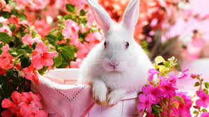 Cute Rabbit Wallpaper HD ...