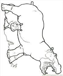 Hippopotamus Coloring Pages Getcoloringpagescom