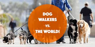 dog walking advertising are you walking your dogs or are you a dog walker