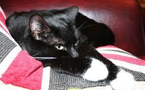 boy black cat names