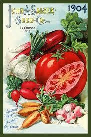 garden seed catalogs. John Salzer Seed Co 1904 Garden Catalogs D