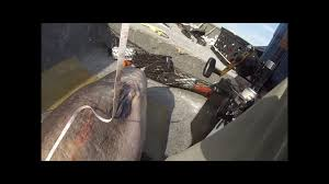 Blue Catfish Length Weight Chart How To Weigh A Trophy Catfish Without A Scale