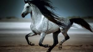 wild horses galloping. Beautiful Wild Amazing Galloping Horses 1080p HD With Wild