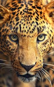 Wild animals Live Wallpaper for Android ...