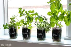 Small Picture Perfect Indoor Herb Garden Bob Blogs On Decorating