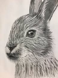 Rabbit Drawing by Cathy Johnson
