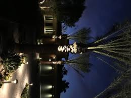 palm tree spot light in la quinta