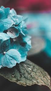Wallpaper blue flowers • Wallpaper For ...