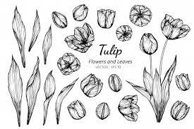 Verschillende Realistische Groeiende Rode Tulpen Vector Gratis