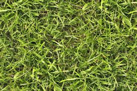 grass texture game. Wonderful Game Seamless Grass Texture Free Download And Game T
