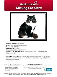 Missing Person Poster Template Impressive Lost Poster Template Lost Poster Template Animal A Open Pet And