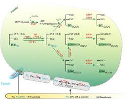 acyl lipid metabolism f03 01 jpg