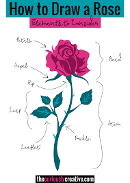 the ultimate list of resources and tutorials for how to draw a rose with pencil