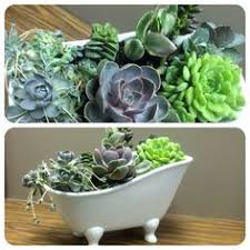 great office plants. succulents great office plants t