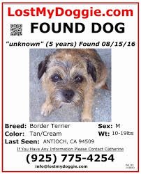 how to make lost dog flyers lost dog sign maker muco tadkanews co brilliant found flyer gallery