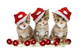 Christmas kittens Wallpaper #20517