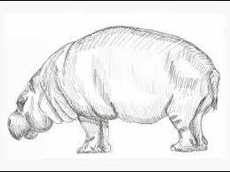 Sketches Animal Animal Sketches Youtube