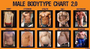 Body Fat Men Chart Body Type Chart For Men This Is Pretty Funny In 2019