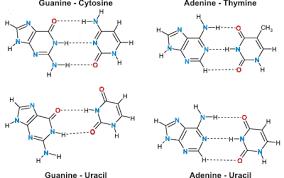 Nucleic Acid Hydration