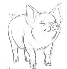736x765 cute pig pencil drawing pig cartoon sketch